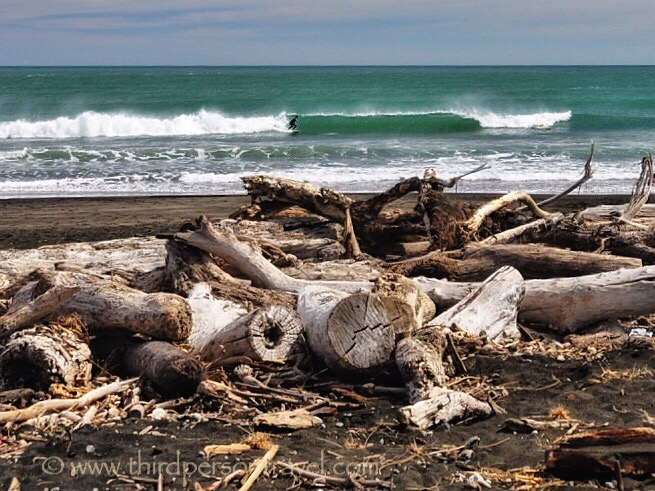 decomposing trees, washed up on a black sand beach in New Zealand