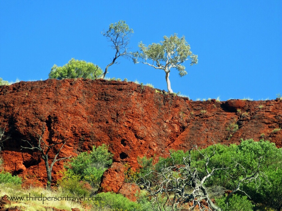 deep blue sky, iron red cliff face, white trunked eucalypts with grey green foliage, the colours of the Kimberley NW Australia